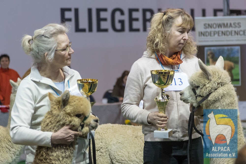 Champion ProPalmiro vom Oberberg und Reserve-Champion Titus-Sohn
