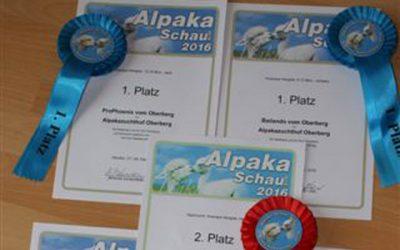 Ilshofen 2016 – Reserve-Nachzuchtsieger